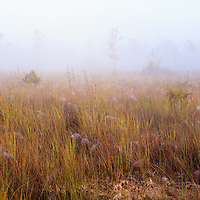 Morning fog covers spider-web-filled sawgrass prairie and pine rocklands near Pine Glades Lake in Everglades National Park, Florida. WATERMARKS WILL NOT APPEAR ON PRINTS OR LICENSED IMAGES.