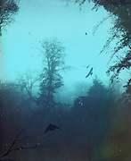 Moody foggy trees on a November morning - textured and tinted photograph<br /> Prints &amp; more:<br /> http://www.redbubble.com/people/dyrkwyst/works/17303330-moody-blues?ref=recent-owner