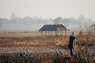 A farmer works at a paddy field on December 20 of 2006 in Mae Sot, Thailand. Immigrants in Thailand do very hard jobs for much smaller fee than Thais would do..Burma has since 1962 been ruled by dictator Burman Regimes. Pro democrats and minority ethnics have since been object of human rights abuses and armed minority groups has appeared bringing a state of Civil War..This situation makes every days people to flee their villages to go to Thailand..Once in Thailand the illegal immigrants are very vulnerable as there is non law which support them. Although they are not allowed to work or do anything, the Thai industry uses them as cheap labour for cheaper production.