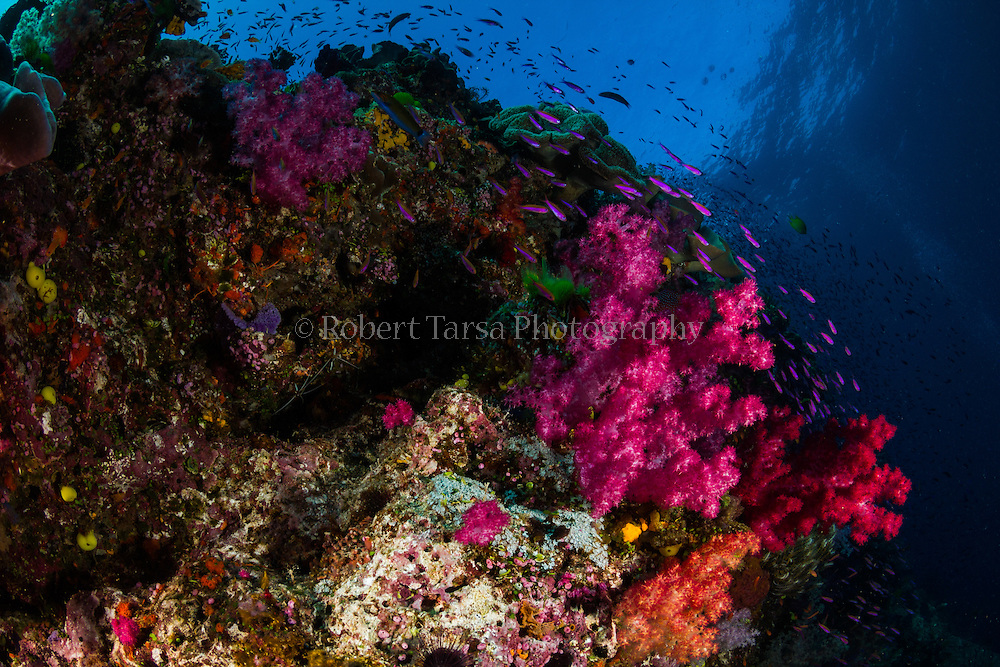 Tropical fish swimming amongst soft corals on a Fijian reef.