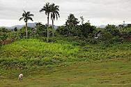 Farm in Las Tres Palmas, Pinar del Rio Province, Cuba.