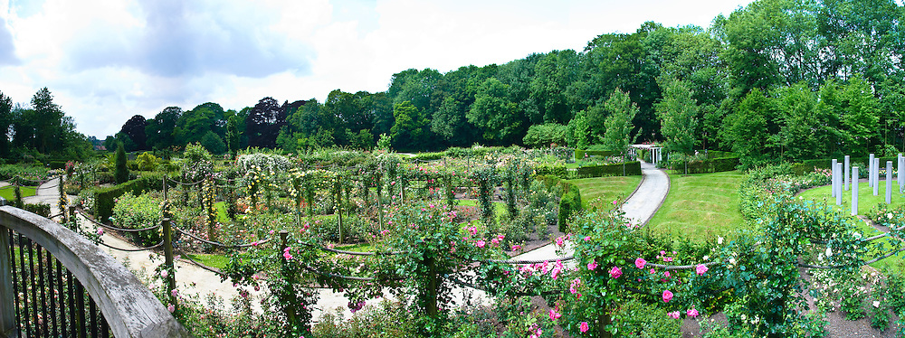 Coloma Rose Garden in Belgium has more than 30,000 bushes and 3000 varieties of rose. It is one of the largest rose gardens in Europe.