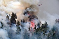 The Willow Fire burns in the Sierra National Forest early Sunday morning July 26, 2015. By first light the fire had burned approx. 1,100 acres and was 5 % contained. Some roads were closed and evacuations were in place as 450 structures were threatened. The fire was burning in Willow Canyon.