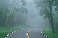 Road in Fog, Shenandoah National Park, Skyline Drive, Blue Ridge Mountains, Virginia, establsihed 1929