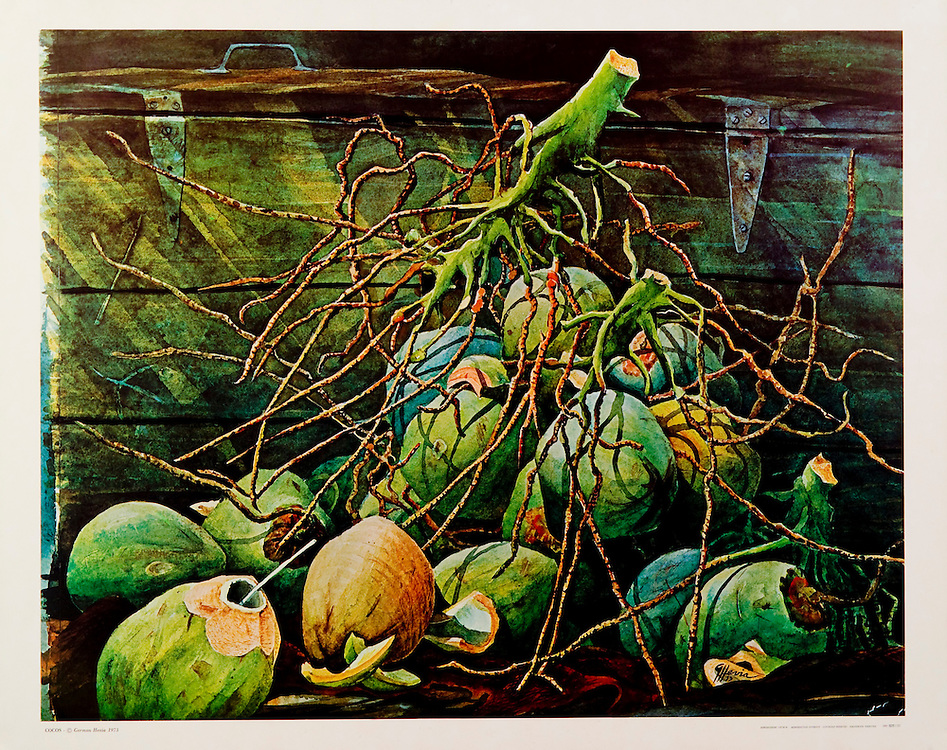 Cat.#29 - Print of a watercolor painting of a bunch of coconuts, a typical  scene in the Tropics. Printed in Italy on heavy weight, smooth stock.<br />