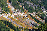 Fall foliage in Stevens Canyon and one of the slide zones in Mount Rainier National Park, Washington State, USA