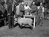 1952 - 27th Annual Suffolk Sheep Show