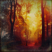 Colorful hazy  forest in morning light - manipulated photograph<br />