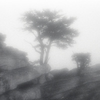 PL12014-00...NORTH CAROLINA - Pinhole image of a tree in Hanging Rock State Park.