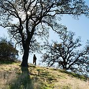 California: Sacramento Valley, foothills