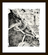 Rodeo Series 2011 - The Spirit, Beauty, and Strength of the American West.<br /> <br /> A Craig W. Cutler Photography 'American West' HIGHLY LIMITED EDITION of only 3 Prints of each Image - Worldwide!