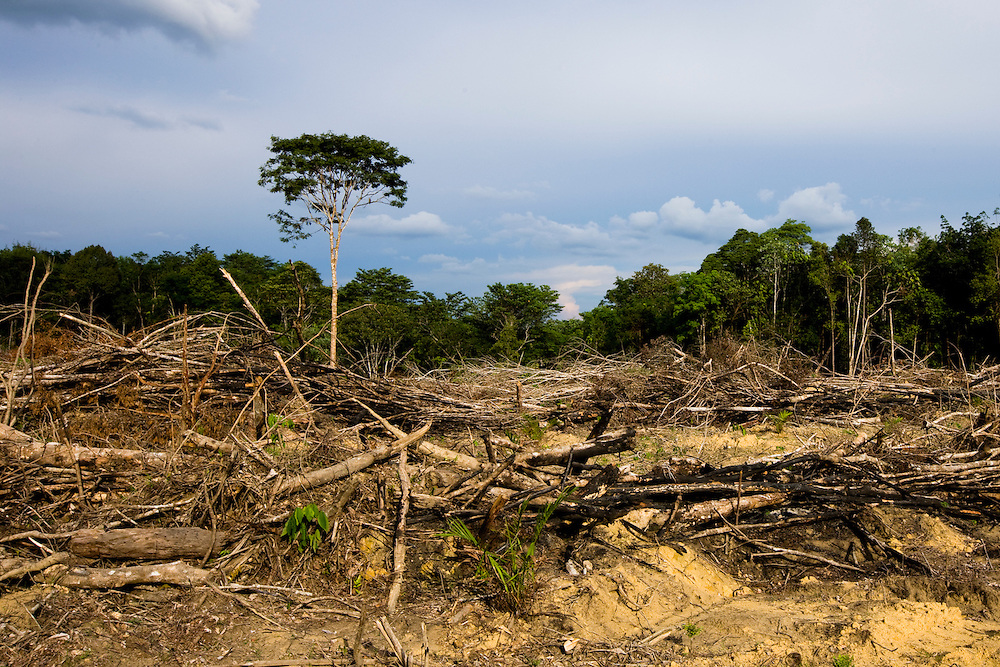 Land clearing on the road to Tesso Nilo National Park, Sumatra, Indonesia, Aug. 30, 2008..Daniel Beltra/Greenpeace