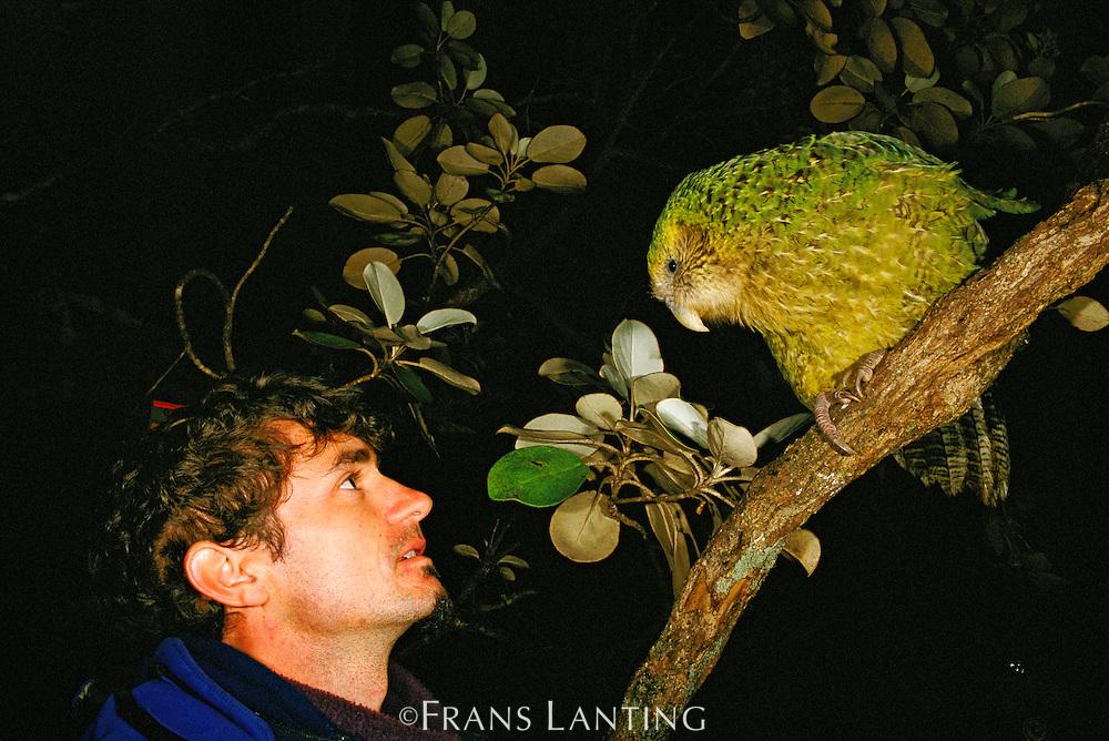 Researcher Gideon Climo and female kakapo, Strigops habroptila, Codfish Island, New Zealand