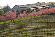 Oregon - Cristom