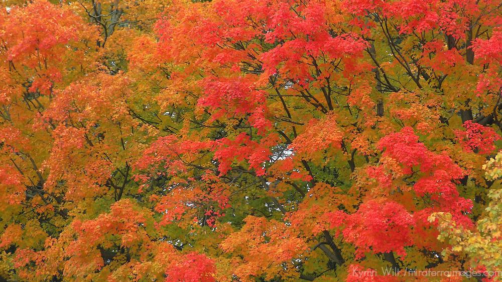 North America, USA, Vermont. Vibrant Fall colors.