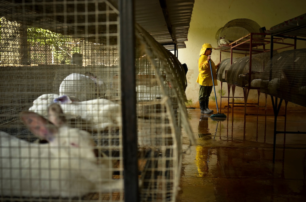 A female inmate cleans rabbit cages at the Granja for women in El Salvador. The Granja, a newly launched project, is a working farm that teaches female inmates agriculture skills. In exchange for their work, inmates enjoy better living conditions and more personal freedoms than they had previously at Illopango prison in San Salvador, El Salvador.