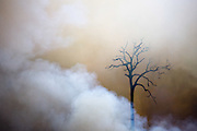 Smoke reveals a single tree as a fire burns the Amazon rainforest, clearing the way for cattle or crop farming in Sao Felix Do Xingu municipality, in Para State, Brazil, August, 2008.