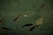 Travel in Croatia<br /> <br /> Fish inside the Tvrdalj Castle in Stari Grad, Hvar Island<br /> <br /> June 2013<br /> Matt Lutton