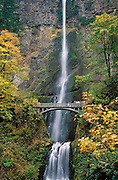 Multnomah Falls with visitors on Benson Bridge and trees in Fall color; Columbia River Gorge National Scenic Area, Oregon.