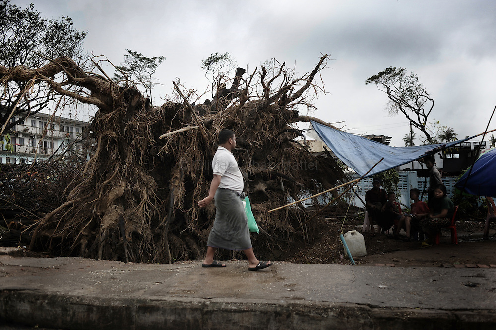 A man walks past a tree uprooted by cyclone Nargis in a street of Yangon on May 15, 2008. State television on May 16, 2008 put the latest toll at 77,738 dead and 55,917 missing from Cyclone Nargis, which barrelled into the country on May 2-3, wiping away entire villages and submerging swathes of land under flood waters.