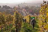Pfaltz & Saxony regions