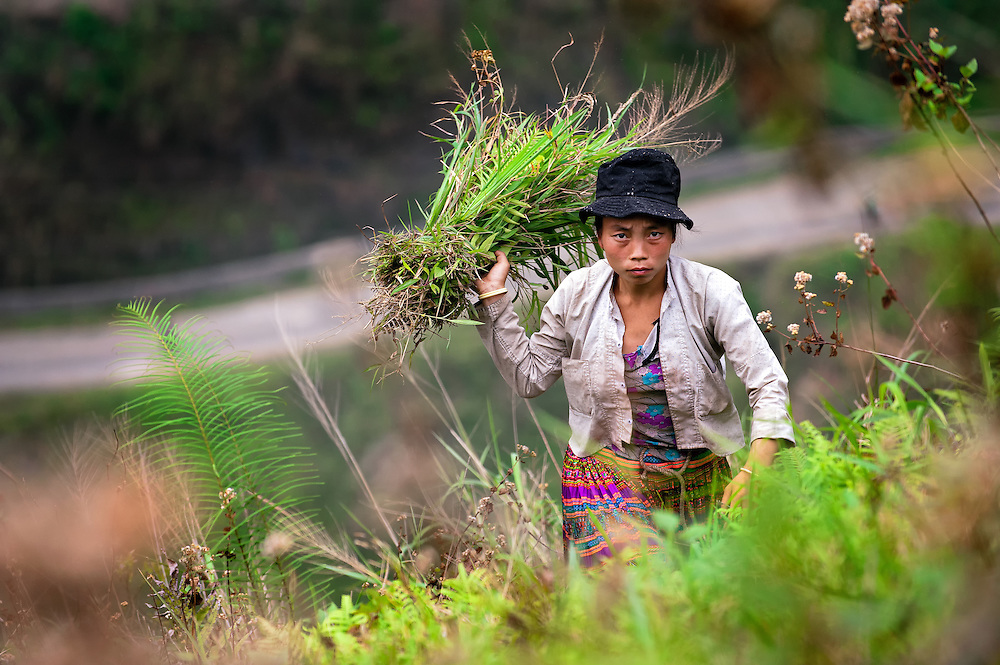 A girl harvesting ferns to be used as fodder in Ha Giang, Vietnam.