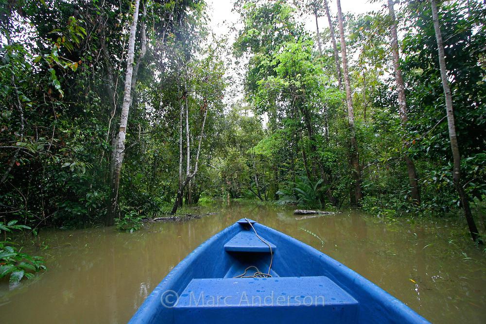 Flooded rainforest during the rainy season, Kinabatangan River, Sabah, Malaysia