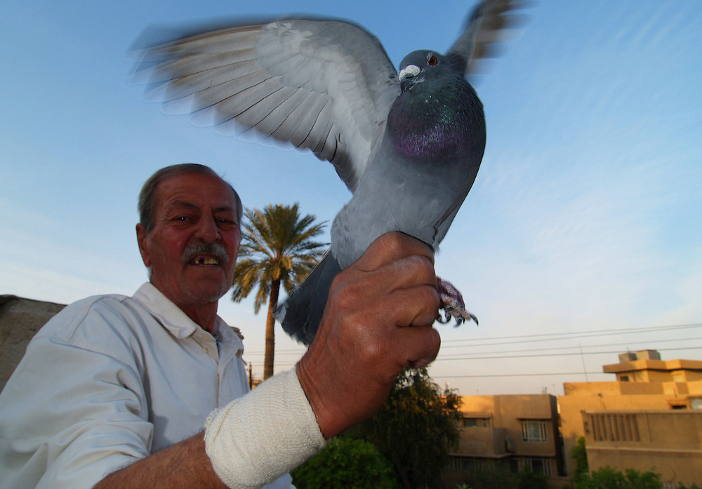 11 March 2004.Baghdad, Iraq..Karrada.Many of the houses have pigeon lofts. The owners race their birds to and from places like Basra and Mosul.