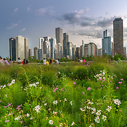 Piet Oudolf designed flower beds at Lurie Garden in Millennium Park, Chicago. Photo by Alabastro Photography.