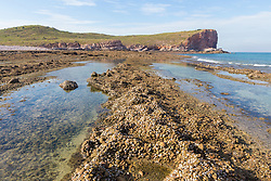 Shallow intertidal pool on Macleay Island on the Kimberley coast.