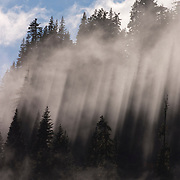 The afternoon sun shines into thick fog at Cayuse Pass, Washington. The beams are caused by the trees casting their shadows onto the fog.