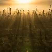 Canada, YT - Peel Watershed 2014