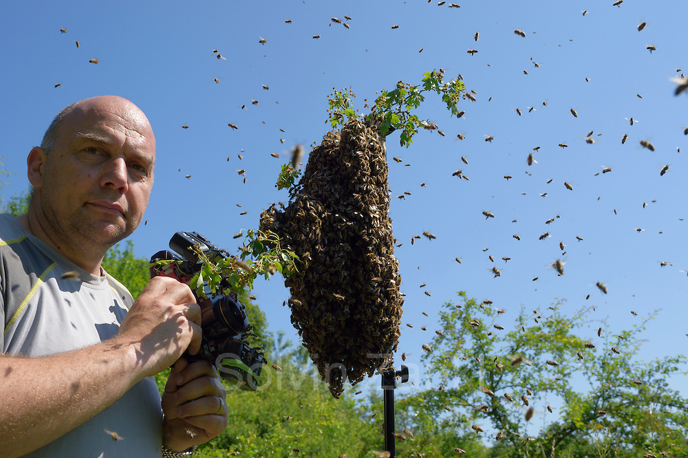 Fotograf Solvin Zankl (links) fotografiert einen Bienenschwarm, der vor wenigen Minuten aus einem Bienenvolk ausgezogen ist. Kiel, Deutschland