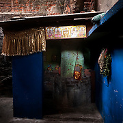In a far corner of the neighborhood, a small Hindu shrine built around a Jak fruit Tree (Artocarpus heterophyllus)