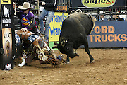 January 3, 2013- New York, New York- A Professional Bull Rider rides a Bull at the 2013 Elite Built Ford Tough Series Season Kicks Off the 20th anniversary of the Professional Bull Riding Competition  The PBR is the world's premier bull riding organization. 2013 marks the 20th anniversary of PBR competition. In just two decades, the dream of 20 bull riders has become a global sports phenomenon that is televised worldwide. More than 100 million viewers annually watch primetime PBR programming on networks around the world and nearly two million fans attend Built Ford Tough Series and Touring Pro Division events each year. (Terrence Jennings)
