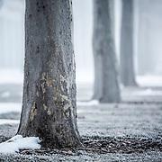 Campus- Winter Photos
