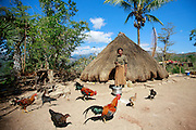 Batista Dos Santos and family in Bertakefe standing in front their house with roosters and dogs. Photo UNMIT/Martine Perret. 11 August 2011