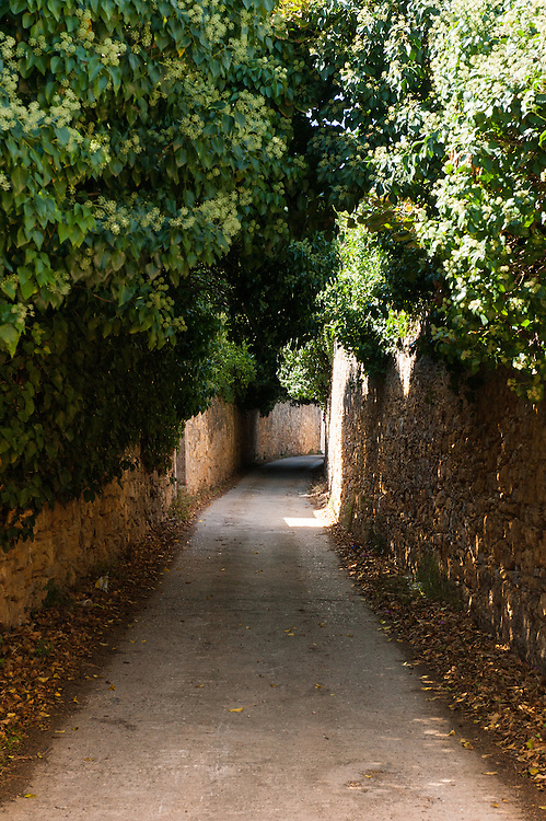A narrow street in Kampos, Chios. The high walls are build to protect the citrus trees from extreme weather. <br /> Kampos of Chios  is one of the most distinctive areas of the island. It is 6 Km south of Chios Town and is widely known for the impressive mansions with their citrus fruits gardens. The area is protected by the Greek Ministry for Culture, as a historic site and traditional settlement. The high walls made of the local reddish stone protect the gardens of citrus fruits from extreme weather conditions.  The Genoese and local aristocracy of Chios started building their mansions in the area in the 14th century. The name &ldquo;Kampos&rdquo; (&ldquo;Campus&rdquo; in Latin) is found in travellers&rsquo; accounts since 1673.  The Genoese created the extensive citrus gardens in Kampos in the 13th century.