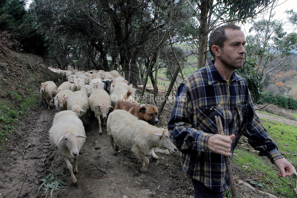 Jose Manuel Etxeberria takes his sheep out in the countryside near Getaria.