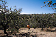 Enrique Enriquez Palafox, coordinator of the Nogales office of Grupo Beta, surveys the desert near Nogales, Sonora, Mexico, for migrants in need of help on Friday, Feb. 1, 2008. Grupo Beta is an agency of the Mexican federal government that provides services to migrants. The work can be dangerous; Palafox has been shot five times.