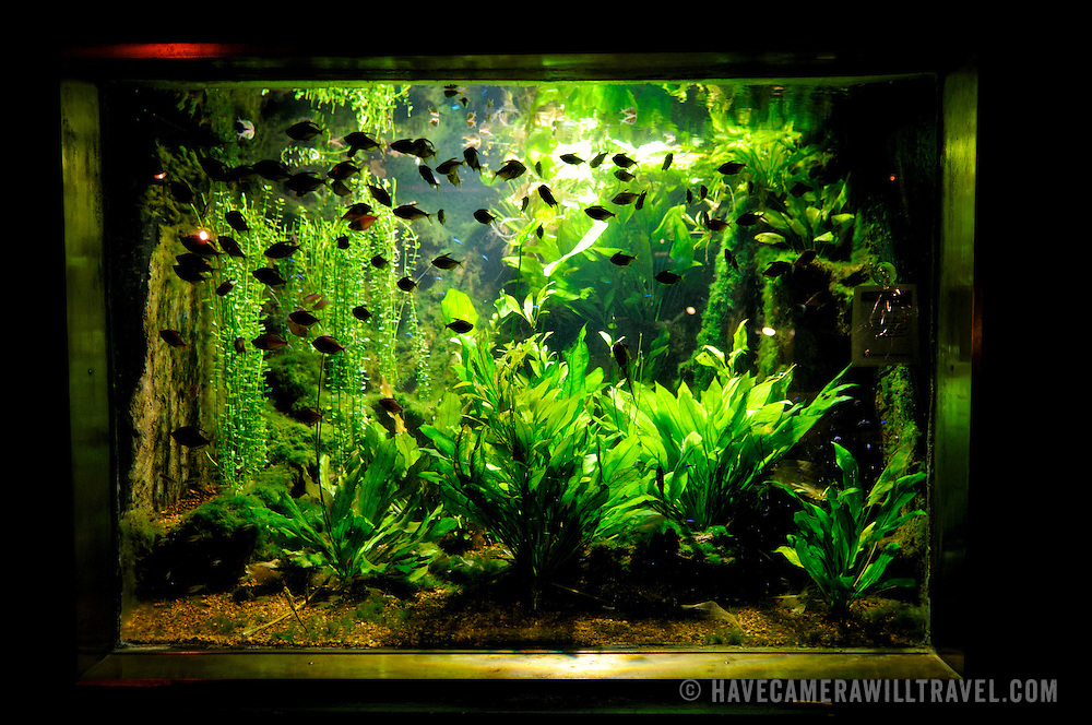 school of small fish in a tank at Washington DCs National Aquarium ...