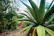 356201-1034 ~ Copyright: George H.H. Huey ~ Hiker exploring the Yawzi Point Trail with large agave plants and cactus.  Southeast coast of St. John Island.  U.S. Virgin Islands National Park, Caribbean.