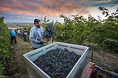 WWC year in the vineyard selected 2014