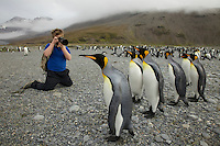 Russell Laman photographing King Penguins (Aptenodytes patagonicus)<br />St. Andrews Bay, South Georgia