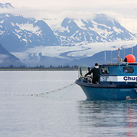 A commercial fisherman tows his gillnet on the Copper River Delta, on the North Gulf Coast of Alaska. Scott Glacier and the Chugach Mountians are in the background. The Chugach Mountains are home to the Chugach National Forest.