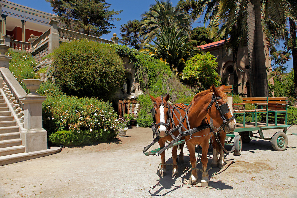 South America, Chile, Santiago. Horses of Casa Real Hotel and Santa Rita Winery.