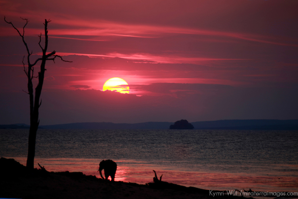 Africa, Zimbabwe, Bumi Hills. The sun sets as a lone elephant watches from the shore of Lake Kariba.