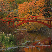 Massachusetts with its colorful autumn hues attracts travelers and locals alike. From Boston to the Berkshires there is something for everyone to enjoy. This morning I explore my new neighborhood and found this beautiful footbridge in South Natick. Sargent Bridge, is a wooden arch bridge surrounded by fall foliage peak colors and makes for fine photography in itself. The Great Blue Heron in front of the wooden bridge at the banks of the Charles River provided additional interest in form of wildlife. I am so pleased to have encountered this nature and urban scenery and captured it in this autumn photo.  <br /> <br /> South Natick fall foliage photography images are available as museum quality photography prints, canvas prints, acrylic prints or metal prints. Prints may be framed and matted to the individual liking and room decor needs:<br /> <br /> http://juergen-roth.pixels.com/featured/south-natick-sargent-footbridge-juergen-roth.html<br /> <br /> Good light and happy photo making!<br /> <br /> My best,<br /> <br /> Juergen<br /> Licensing: http://www.rothgalleries.com<br /> Photo Prints: http://fineartamerica.com/profiles/juergen-roth.html<br /> Photo Blog: http://whereintheworldisjuergen.blogspot.com<br /> Instagram: https://www.instagram.com/rothgalleries<br /> Twitter: https://twitter.com/naturefineart<br /> Facebook: https://www.facebook.com/naturefineart