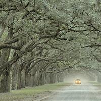 USA,Georgia,Savannah, Wormstoe State Historic site, oak alley
