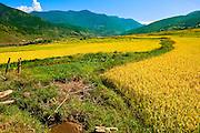 Asia, Bhutan, Chimi, Lhakhang